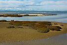 Tikapa Moana Wetland 2 by Werner Padarin