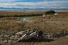 Tikapa Moana Wetland 3 by Werner Padarin