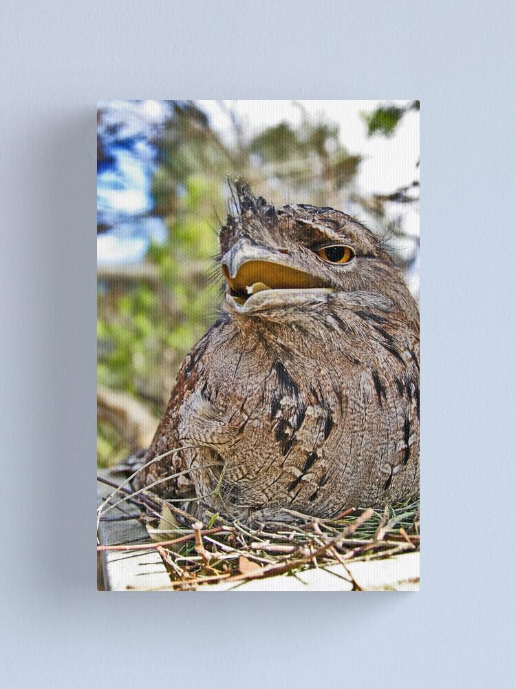 Alternate view of My nest  Canvas Print