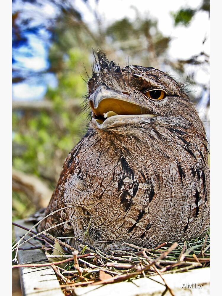 My nest  by AlMiller