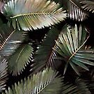 Dark Palm Leaves  by Menega  Sabidussi