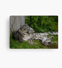 Mother & Babies Canvas Print
