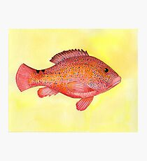 Grouper Fish Wall Art Redbubble