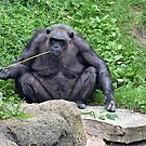 Bored Chimp by Maria Dryfhout
