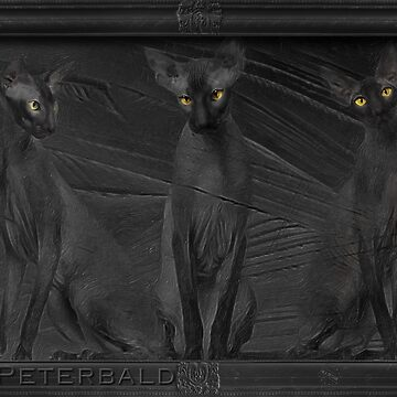 Peterbald Group No 01 by iMia69