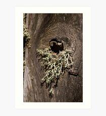 Moss Knothole Art Print