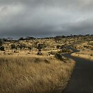 Road To Somewhere by David Lawrence