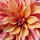 Dahlia Details by Astrid Ewing Photography