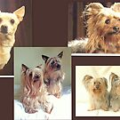 These were the dogs of our lives by jesika