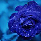 Blaue Rose von nanti