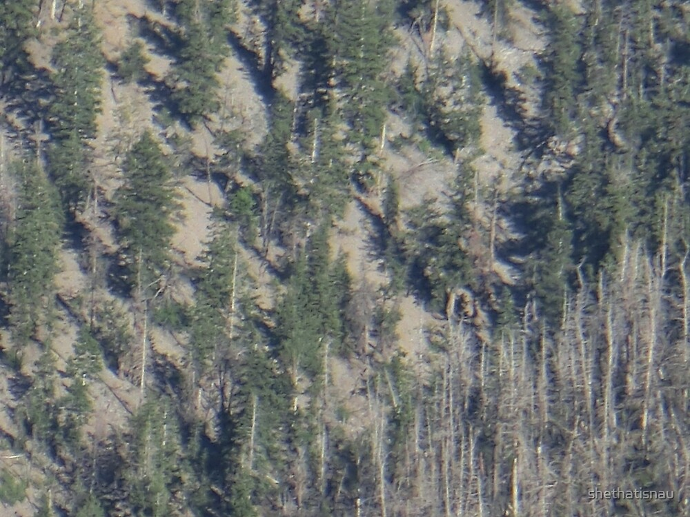 Frühlingsgebirgs-Waldlandschaft von shethatisnau