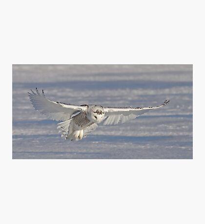 The Hunter - Snowy Owl Photographic Print