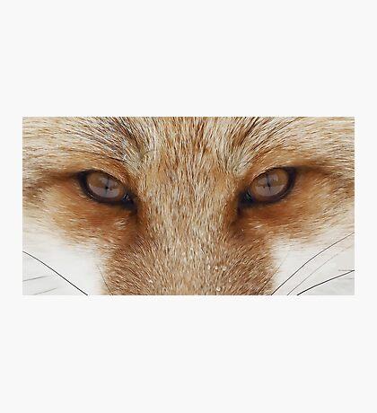 Fox Eyes  Photographic Print