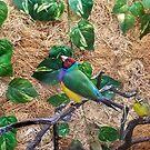 Gouldian Finch by Maria Dryfhout