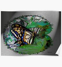 Butterfly Fractal Poster