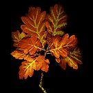 Oak Twig by James Coard