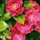 Wild Roses by Gilberte