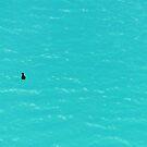 Duck on Water von nurmut