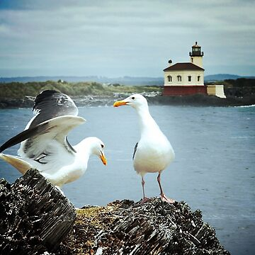Seagulls Play by Doty