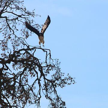 Hawk by lyoung403b