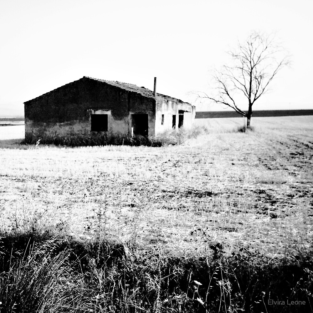Desolation by Elvira Leone