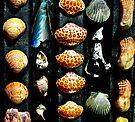 Gulf Coast Shells by Sun Dog Montana