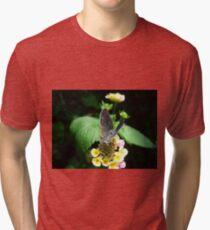 Hairstreak Butterfly Basking Tri-blend T-Shirt