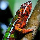 Panther Cameleon by mc27