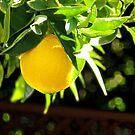 Summer Fruit by Ellen Cotton