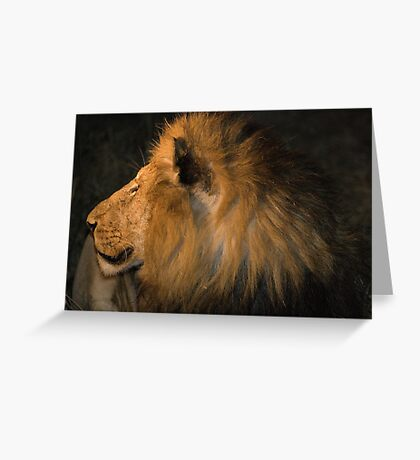 Male Lion Portrait - Night Greeting Card