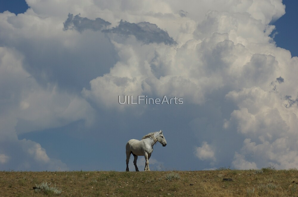 """""""In the Clouds"""" by UILFineArts"""