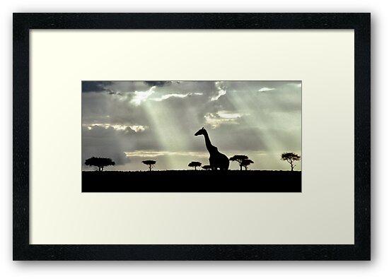 Giraffe Silhouette by Michael  Moss