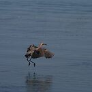 Reddish Egret Hop by Virginia N. Fred