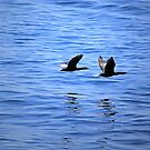 Pair In Flight by jenndes