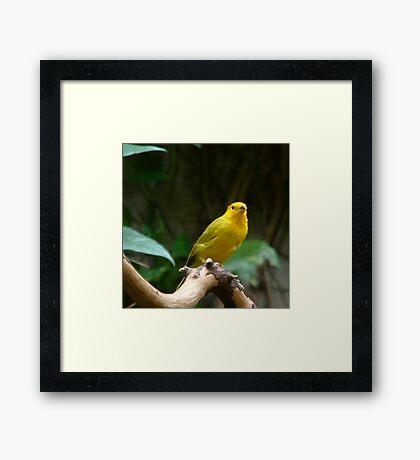 Yellow B ird Framed Print
