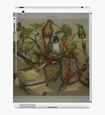 very nice antique picture of kolibri birds  iPad Case/Skin