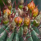 Prickly beauty by vfphoto