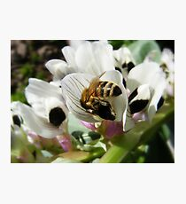 Bee Butt in The Broad Beans Photographic Print