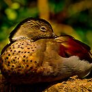 Plumage by maileilani