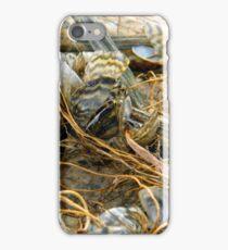 Zebra Mussels iPhone Case/Skin