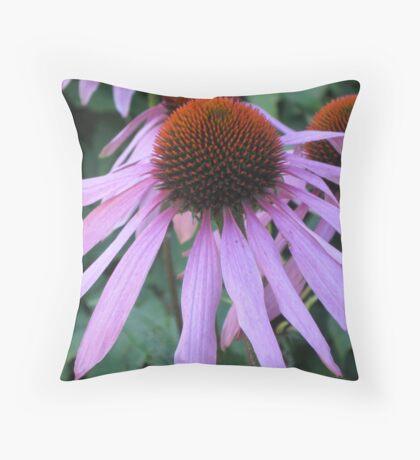 Echinacea purpurea (Asteraceae)  Throw Pillow