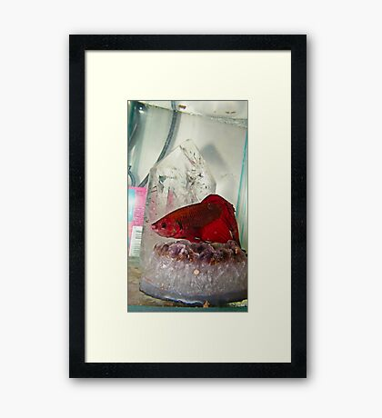 Crystals and Fish  Framed Print