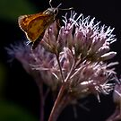 Butterfly by maileilani