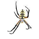 Yellow Garden Spider by 13sparrows