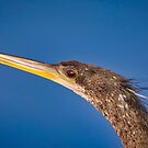 Anhinga Closeup by TJ Baccari Photography