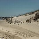 Sand Tracks by John  Kapusta
