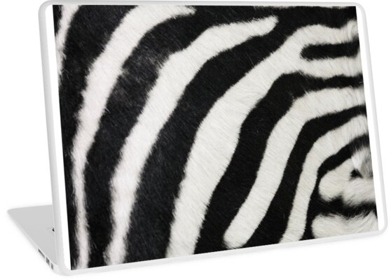 Zebra print  by chihuahuashower