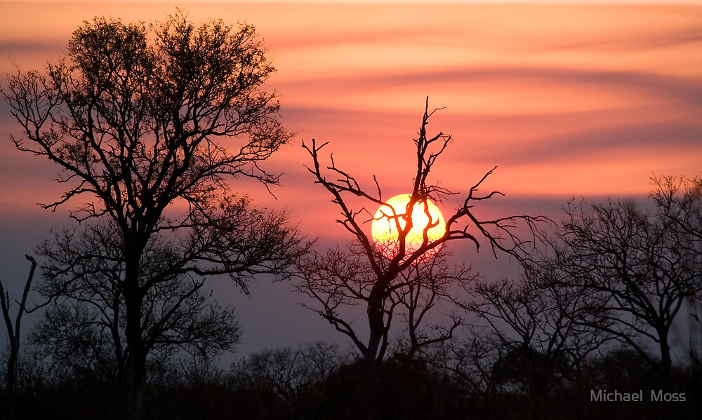 Sabi Sands Sunset by Michael  Moss