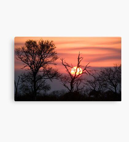 Sabi Sands Sunset Canvas Print