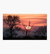 Sabi Sands Sunset Photographic Print